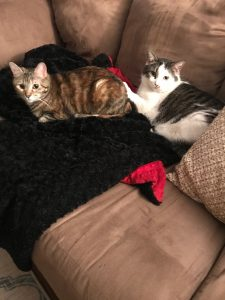 Picture of cats Harper and Nala